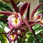 Őszi Orchidea és Bromélia kiállítás a Vajdahunyadvárban